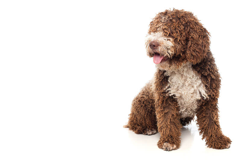 Dog-grooming-banner-1 copy