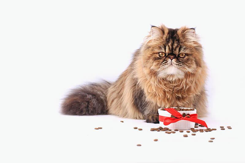cat-food-banner-MIN-1 copy