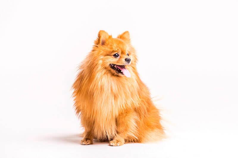 dog-banner-min copy