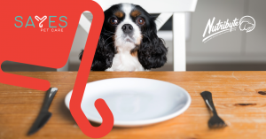 Pet obesity and healthy weight loss