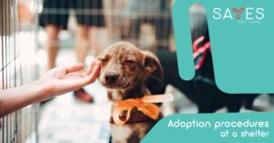 Adoption procedures