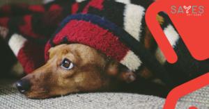 Canine Chronic Bronchitis