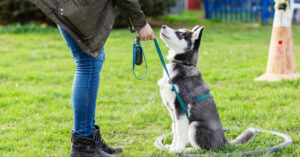 How not to fail at obedience training